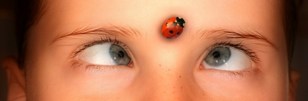 Graphic: You found the ladybug!