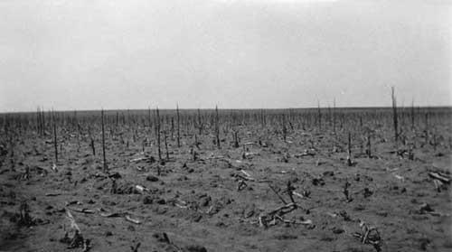 Grasshopper devastated field.
