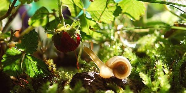 Schnecke im Gebüsch